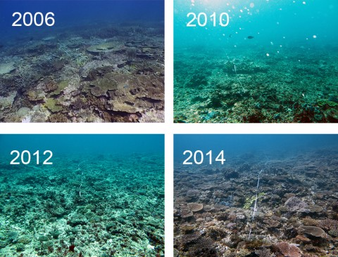 Time series of coral reef disturbance and recovery