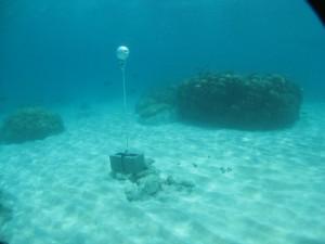 Bramble Cay - Torres Strait Temperature Logger (Flat Logger: BRAMBLEFL1)