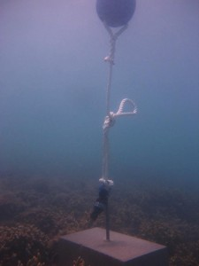 Moa Island - Kubin - Torres Strait Temperature Logger (Flat Logger: KUBINFL1)