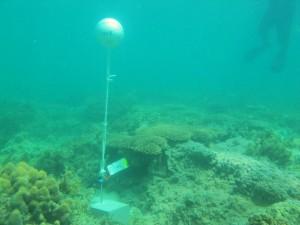 Iama Island - Yam - Torres Strait Temperature Logger (Flat Logger: YAMFL1)