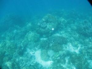 Bramble Cay - Torres Strait Temperature Logger (Slope Logger: BRAMBLESL1)