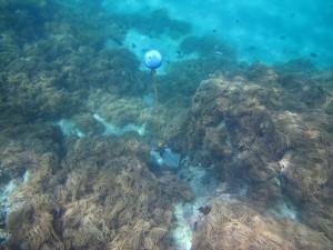 Mer Island - Torres Strait Temperature Logger (Slope Logger: MERSL1)