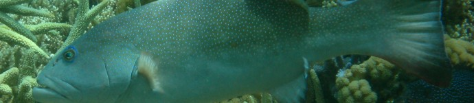 Figure 1 Coral trout