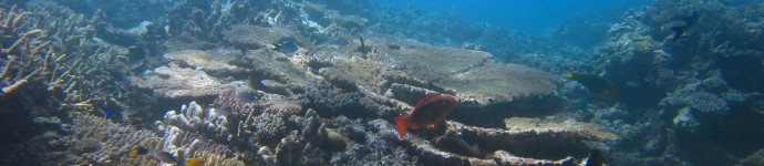 View of the upper reef slope showing a thriving coral community.